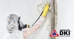 03BC9033-mold_removal9.jpg