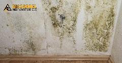 773E0B4A-Mold_Damage_Remediation-06.jpg