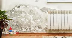 50A39797-mold_removal4.jpg