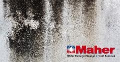 F24B3DD5-Mold_Damage_Remediation-15.jpg