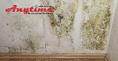 A0591553-Mold_Damage_Remediation-06.jpg